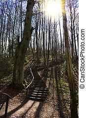 ladder in the Spring Park