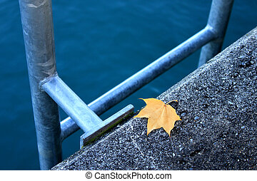Ladder leaf and lake in switzerland