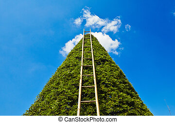 Ladder to heaven - summer day in the garden work