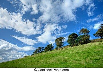 ladera, cotswold, árboles