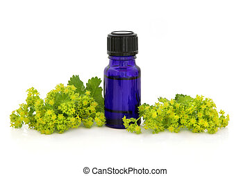 Ladies mantle herb flower sprigs with an aromatherapy bottle over white background. Alchemilla.