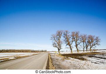 lado estrada, árvores