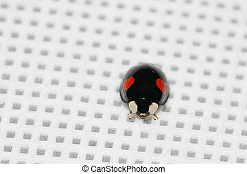 lady beetles on the white background