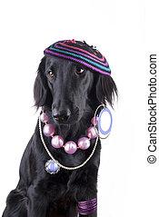 Lady-Dog