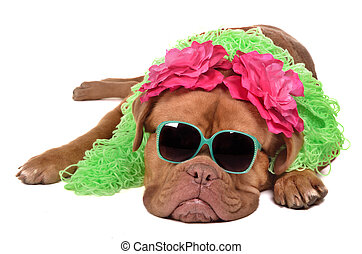 Lady dog wearing glasses, boa and barrettes