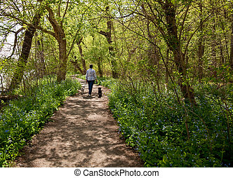 Lady with dogs on path in Bluebells - Middle aged lady with...