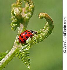 Ladybird 2