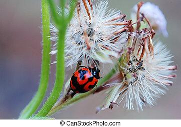 Ladybird and seeds