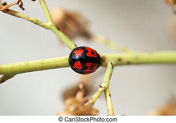 Ladybird and stem