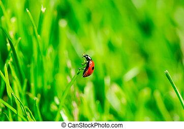 Ladybird bug on green background