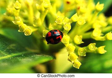 Ladybird & flowers
