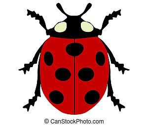 Ladybird isolated