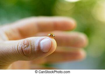 Ladybird on a female hand