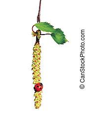 Ladybird on birch tree catkin twig, ladybug and betula...