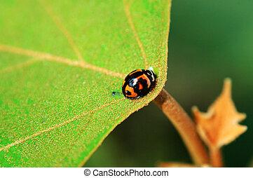 Ladybird on center o