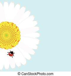 Ladybird on daisy flower over blue background