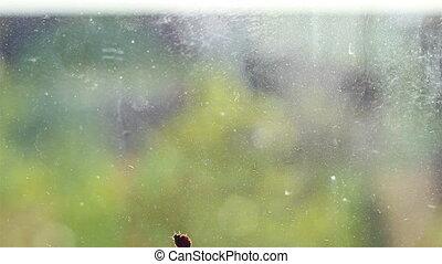 Ladybird on Dirt Glass