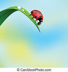 Ladybird on grass.