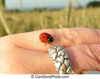 Ladybird on hand