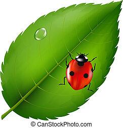 Ladybird On Leaf - Ladybug On Leaf, Isolated On White...