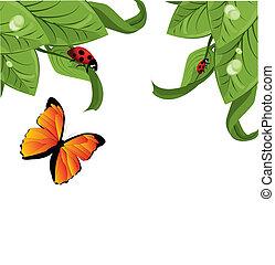 Ladybird on leaf, vector illustration,