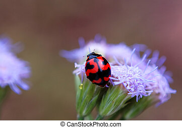 Ladybird on top of p