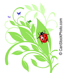 ladybird on trailing plant
