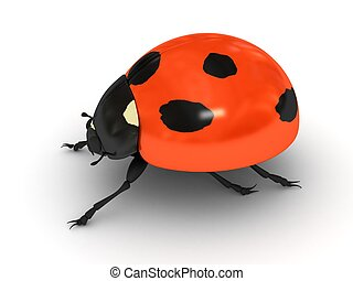 Ladybird over white background
