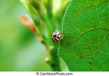 Ladybird standing on