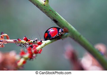 Ladybird staying wit