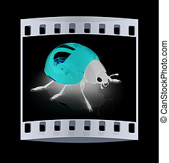 Ladybird. The film strip