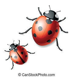 Vector illustration of a ladybird