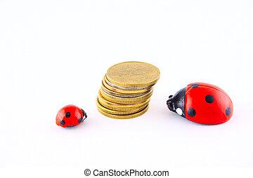 Ladybird with money