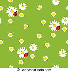 ladybirds, bloemen, chamomile