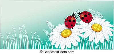 ladybirds, chamomile, dois