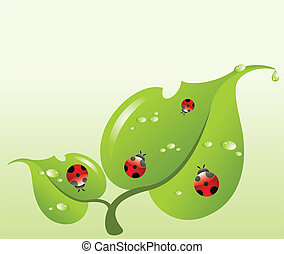 ladybirds, feuille