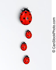 Ladybirds in a vertical row - top view of a ladybug with ...