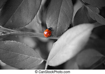 Ladybug - A bright red ladybug on black and white leaves.