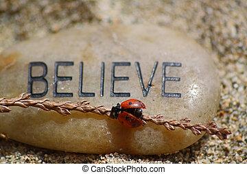 ladybug, acreditar, rocha