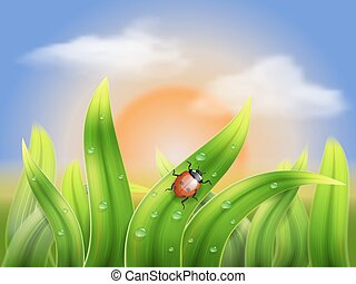ladybug and grass on a background sunset