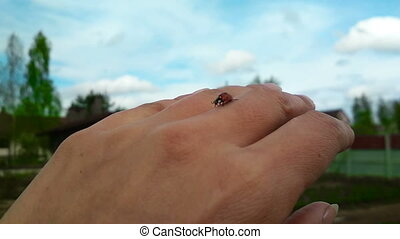 Ladybug creeping by the hand springtime insect, nature...