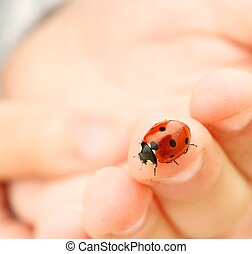 ladybug, dedo, human, sentando