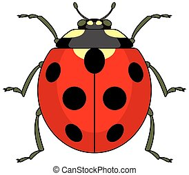 Ladybug - Illustration of the ladybug icon