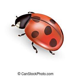 ladybug - Ladybird vector illustration, ladybug vector icon