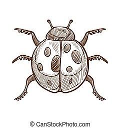 ladybug, esboço, esboço, ilustração, vetorial, monocromático, branca