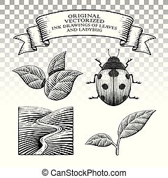 ladybug, estilo, folhas, scratchboard, desenhos, tinta