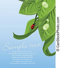 ladybug, folha, verde