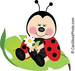 ladybug, folha, verde, sentando