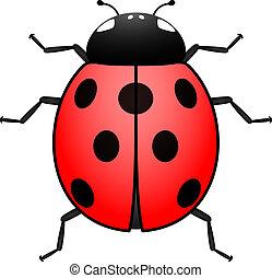 Ladybug illustration - Top view of an illustrated ladybug