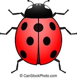 Top view of an illustrated ladybug